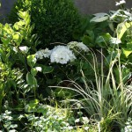 Helle und freundliche Schattenbepflanzung