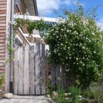 Das Eingangsportal mit der Schwingtür aus Holz wird überdacht von der stark duftenden Kletterrose (Ausführung: Bauherr selbst)