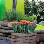 Kräuterbeet und Bällebad aus rustikalen Holzstämmen. Die beiden Glasplatten und die Bälle sind farblich aufeinander abgestimmt. Die Tulpen in der Holzkiste stehen im fröhlichen Kontrast davor. (Ausführung: Fa. Schradi, Pflanzen: Sigrun Schnee)