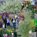 Einmalig: erstmals wurde 2015 ein Schaugarten auf der Gartenmesse Outdoor Ambiente mit gleich zwei von vier Preisen ausgezeichnet. 'Silber' und Kreativpreis für die beste Idee. (Bauausführung: Fa. Schradi, Graffiti: A. Szabo, Pflanzen: Sigrun Schnee)